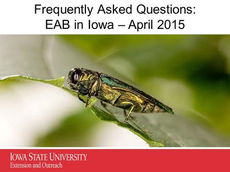 Frequently Asked Questions: EAB in Iowa – April 2015.
