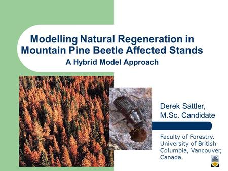 Modelling Natural Regeneration in Mountain Pine Beetle Affected Stands A Hybrid Model Approach Derek Sattler, M.Sc. Candidate Faculty of Forestry. University.