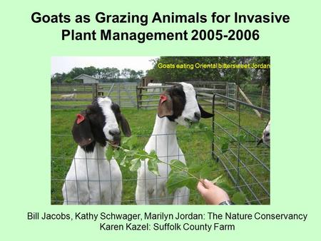 Goats as Grazing Animals for Invasive Plant Management 2005-2006 Bill Jacobs, Kathy Schwager, Marilyn Jordan: The Nature Conservancy Karen Kazel: Suffolk.