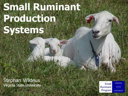 Beaver - 2006 Small Ruminant Production Systems Stephan Wildeus Virginia State University.