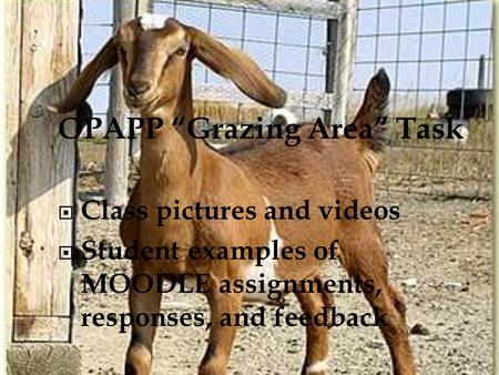 "OPAPP ""Grazing Area"" Task  Class pictures and videos  Student examples of MOODLE assignments, responses, and feedback."