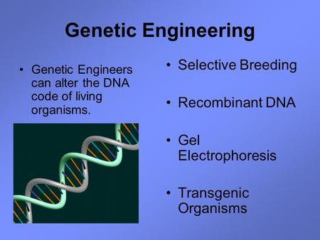 Genetic Engineering Genetic Engineers can alter the DNA code of living organisms. Selective Breeding Recombinant DNA Gel Electrophoresis Transgenic Organisms.