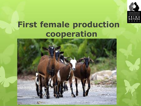 First female production cooperation. Content of the presentation  Sector of Industry  Objective of the project  Key characteristics and advantages.