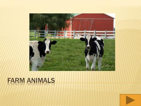  What kinds of animals live on farms?  What is the plural form for each animal name?  Who Am I? Animal name game.