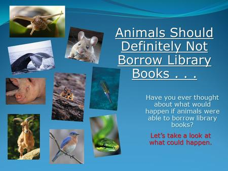 Have you ever thought about what would happen if animals were able to borrow library books? Let's take a look at what could happen. Animals Should Definitely.