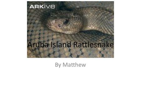 Aruba Island Rattlesnake By Matthew. The rattlesnake lives in rocky hillsides, sandy fields, dry regions, and deserts. Descriptions They are light gray.