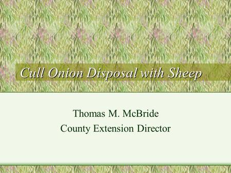 Cull Onion Disposal with Sheep Thomas M. McBride County Extension Director.