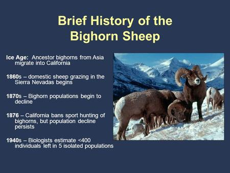 Brief History of the Bighorn Sheep