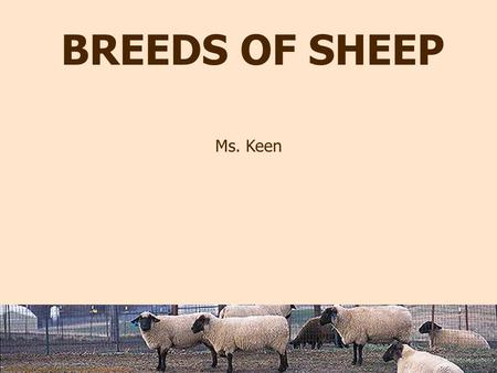 Photo by Peggy Greb courtesy of USDA Agricultural Research Service. BREEDS OF SHEEP Ms. Keen.