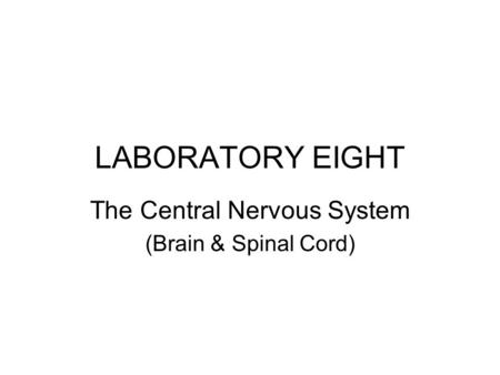 The Central Nervous System (Brain & Spinal Cord)