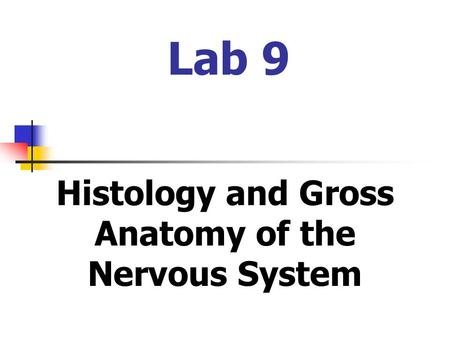 Histology and Gross Anatomy of the Nervous System