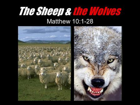 The Sheep & the Wolves Matthew 10:1-28.