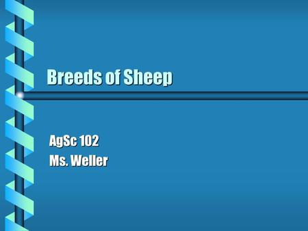 Breeds of Sheep AgSc 102 Ms. Weller. Delaine Merino b Originated from the Spanish Merino b Smooth body b White-faced with white legs b Extremely hardy.