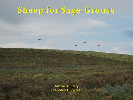Sheep for Sage-Grouse Michael Guttery Utah State University.