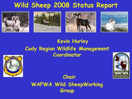 Wild Sheep 2008 Status Report Kevin Hurley Cody Region Wildlife Management Coordinator Chair WAFWA Wild SheepWorking Group.
