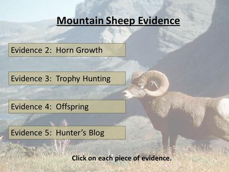 Mountain Sheep Evidence Evidence 2: Horn Growth Evidence 3: Trophy Hunting Evidence 4: Offspring Click on each piece of evidence. Evidence 5: Hunter's.