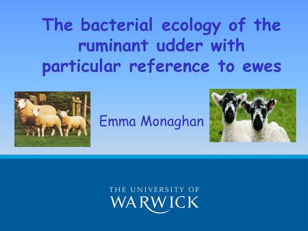 The bacterial ecology of the ruminant udder with particular reference to ewes Emma Monaghan.