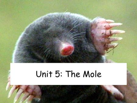 Unit 5: The Mole.