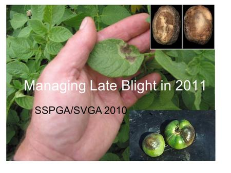 Managing Late Blight in 2011 SSPGA/SVGA 2010. 2010 Late Blight widespread across N. America Arrives in SK in July Commercial growers (SVGA, SSPGA, SGGA)