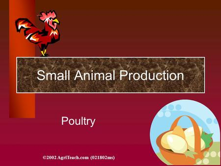 Small Animal Production Poultry ©2002 AgriTeach.com (021802ms)