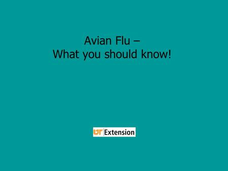 Avian Flu – What you should know!