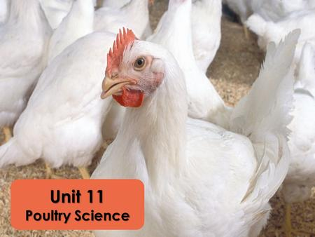 Unit 11 Poultry Science. Poultry Industry Two products – egg and meat Healthy meat choice 90 lbs./person annually Production Types Broiler Production.