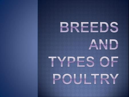 Breeds and types Of Poultry