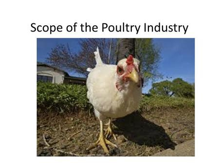 Scope of the Poultry Industry. Just How Big is Poultry in GA?