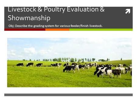 Livestock & Poultry Evaluation & Showmanship