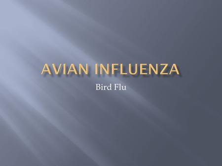 Bird Flu.  Bird flu, also known as Avian Influenza, is a type A influenza virus. It is fatal to humans. Bird flu spreads between both wild and pet birds.