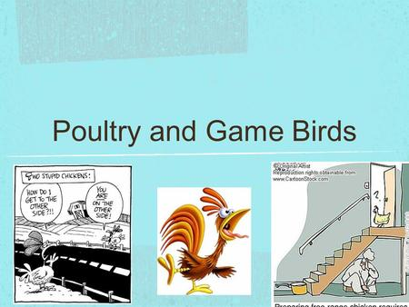 Poultry and Game Birds.
