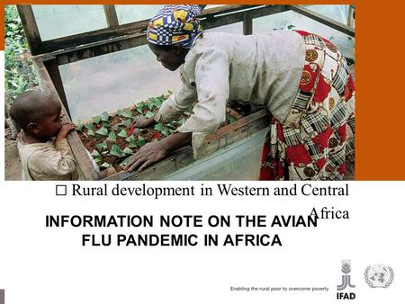 Rural development in Western and Central Africa INFORMATION NOTE ON THE AVIAN FLU PANDEMIC IN AFRICA.