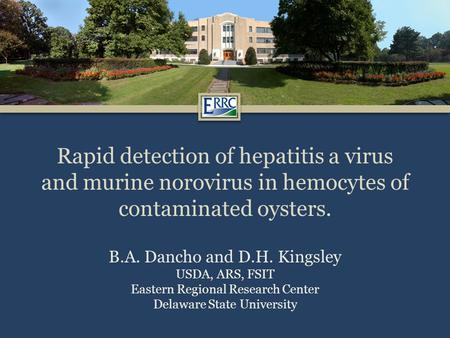 Rapid detection of hepatitis a virus and murine norovirus in hemocytes of contaminated oysters. B.A. Dancho and D.H. Kingsley USDA, ARS, FSIT Eastern Regional.