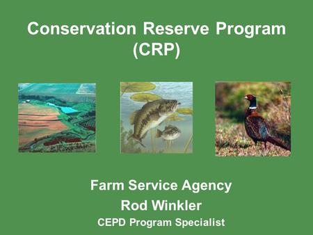 Conservation Reserve Program (CRP) Farm Service Agency Rod Winkler CEPD Program Specialist.
