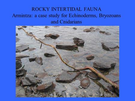 ROCKY INTERTIDAL FAUNA Armintza: a case study for Echinoderms, Bryozoans and Cnidarians.