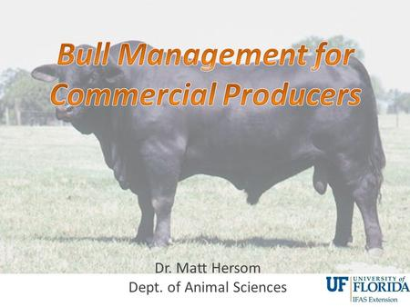 Dr. Matt Hersom Dept. of Animal Sciences. Bull Management General Thoughts on Management Nutritional Stages Feeding Examples.