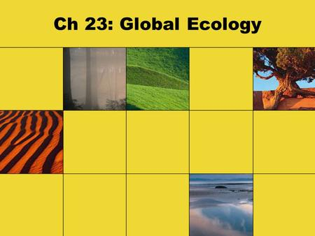 Ch 23: Global Ecology. Ecology Terms Ecology - the study of the interactions of organisms with one another and with the physical environment Biosphere.