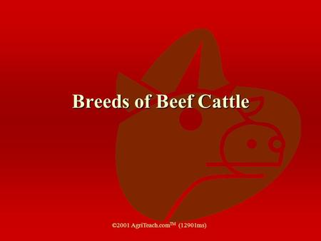 Breeds of Beef Cattle ©2001 AgriTeach.com TM (12901ms)