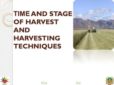 TIME AND STAGE OF HARVEST AND HARVESTING TECHNIQUES NextEnd.