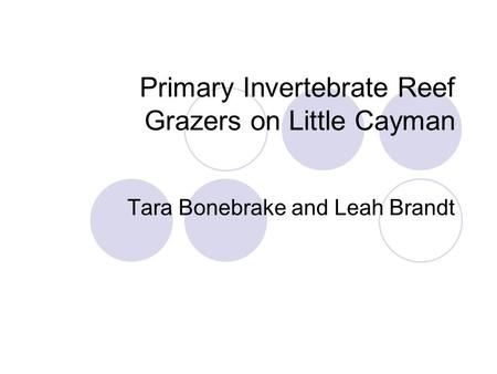Primary Invertebrate Reef Grazers on Little Cayman Tara Bonebrake and Leah Brandt.