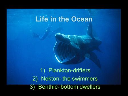 Life in the Ocean 1)Plankton-drifters 2)Nekton- the swimmers 3)Benthic- bottom dwellers.