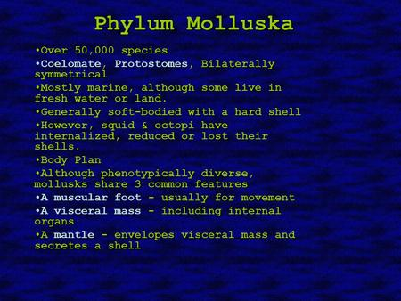 Phylum Molluska Over 50,000 speciesOver 50,000 species Coelomate, Protostomes, Bilaterally symmetricalCoelomate, Protostomes, Bilaterally symmetrical Mostly.