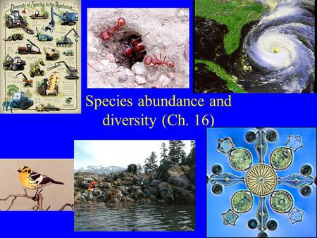 Species abundance and diversity (Ch. 16). New Unit: Communities/Ecosystems Community: Interacting species in defined area. Functional groups: subdivide.