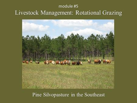 Module #5 Livestock Management: Rotational Grazing Pine Silvopasture in the Southeast.