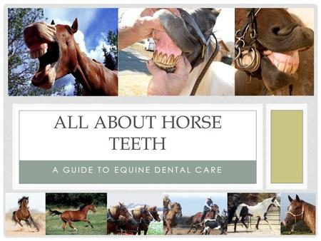 A GUIDE TO EQUINE DENTAL CARE ALL ABOUT HORSE TEETH.