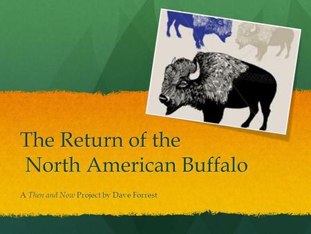 The Return of the North American Buffalo A Then and Now Project by Dave Forrest.