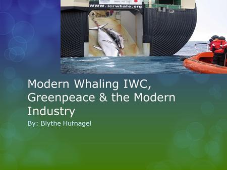 Modern Whaling IWC, Greenpeace & the Modern Industry By: Blythe Hufnagel.