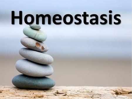 Homeostasis. Learning outcomes 1.The definition of homeostasis: the body is maintained as constant environment, the concentrations of substances, the.