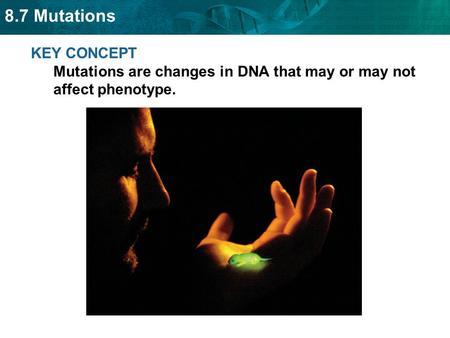 SC.912.L.16.4 Explain how mutations in the DNA sequence may or may not result in phenotypic change. Explain how mutations in gametes may result in.