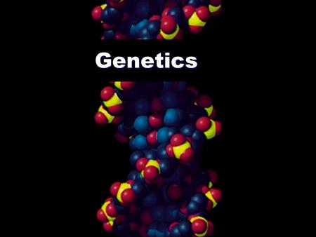Genetics The Nature/Nurture Debate How great is the influence of genes or environment on our behavior, personality, biology, etc.?